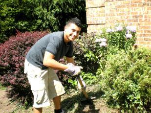 Garden bed clean-up