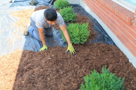 Garden bed design with cedar mulch application