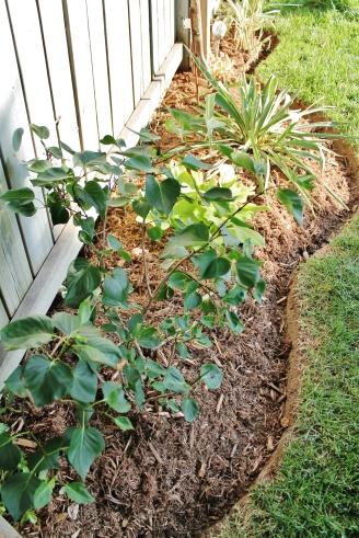 Garden bed edging